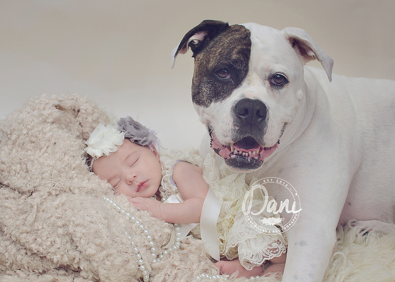 American bulldog with baby girl in a vintage photoshoot in Pembroke pines florida